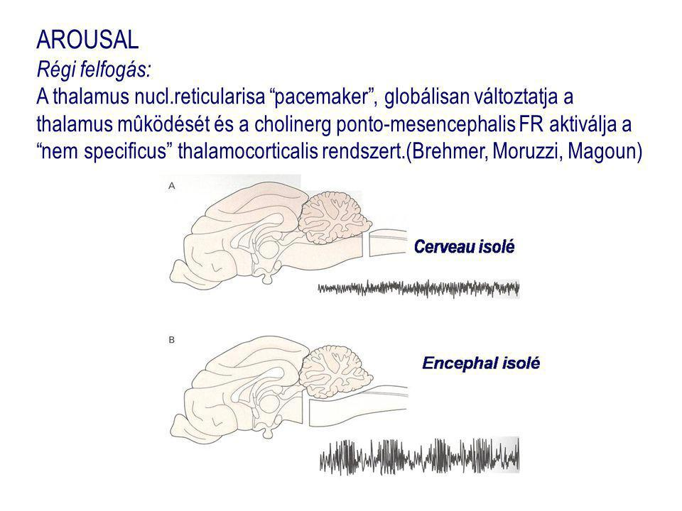 AROUSAL ( új felfogás ) : Az agytörzsben, a basalis előagyban és a hypothalamusban lévő neurotransmitter rendszer közvetlenül hat az agykéreg nagy területeire, anélkül, hogy átkapcsolna a thalamusban pontomes.FRkolinerg Subst.nigradopaminerg agytörzsi raphe magok serotoninerg locus coeruleus adrenerg hátsó hypothalamus histaminerg