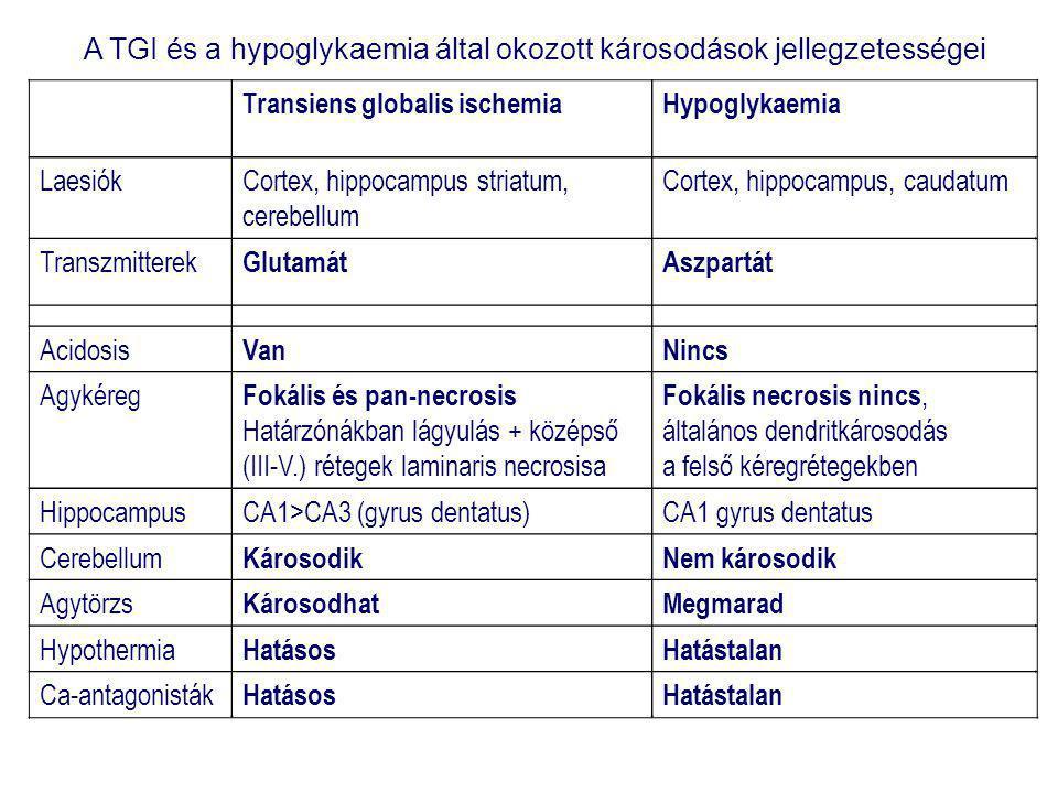 Transiens globalis ischemiaHypoglykaemia LaesiókCortex, hippocampus striatum, cerebellum Cortex, hippocampus, caudatum Transzmitterek GlutamátAszpartát Acidosis VanNincs Agykéreg Fokális és pan-necrosis Határzónákban lágyulás + középső (III-V.) rétegek laminaris necrosisa Fokális necrosis nincs, általános dendritkárosodás a felső kéregrétegekben HippocampusCA1>CA3 (gyrus dentatus)CA1 gyrus dentatus Cerebellum KárosodikNem károsodik Agytörzs KárosodhatMegmarad Hypothermia HatásosHatástalan Ca-antagonisták HatásosHatástalan A TGI és a hypoglykaemia által okozott károsodások jellegzetességei