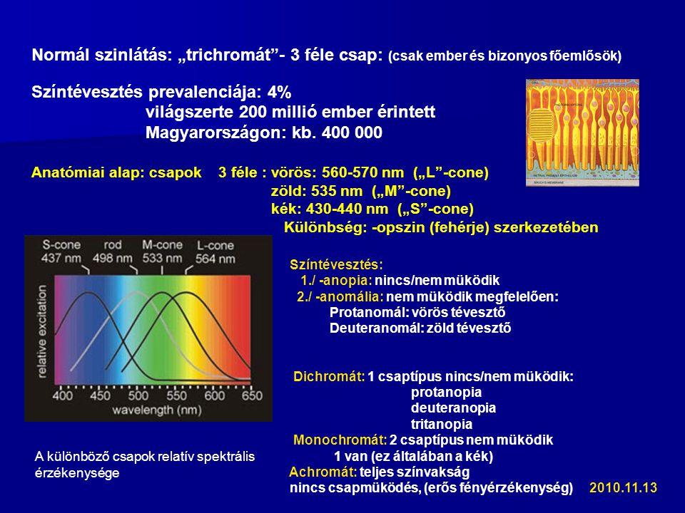 """Normál szinlátás: """"trichromát - 3 féle csap: (csak ember és bizonyos főemlősök) Színtévesztés prevalenciája: 4% világszerte 200 millió ember érintett Magyarországon: kb."""