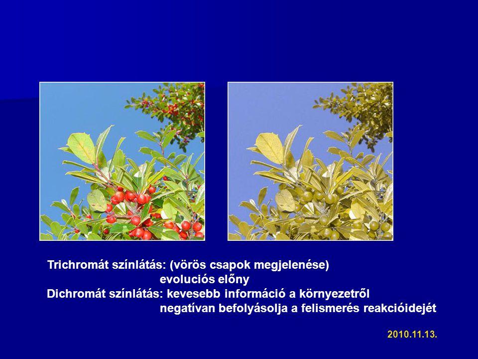 Trichromát színlátás: (vörös csapok megjelenése) evoluciós előny Dichromát színlátás: kevesebb információ a környezetről negatívan befolyásolja a felismerés reakcióidejét 2010.11.13.