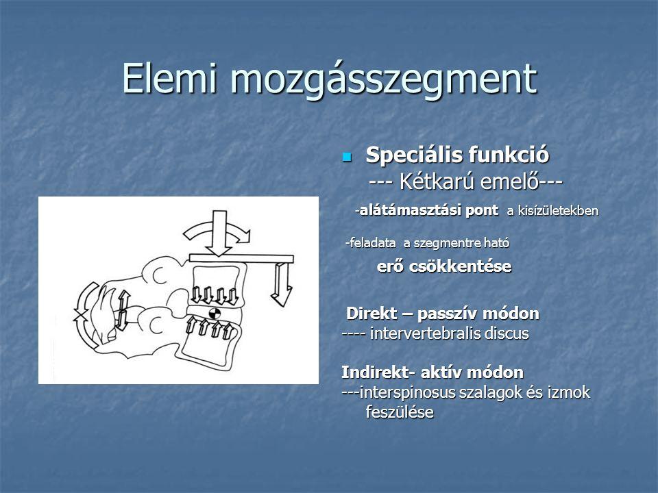 Elemi mozgásszegment Speciális funkció Speciális funkció --- Kétkarú emelő--- --- Kétkarú emelő--- - alátámasztási pont a kisízületekben - alátámasztá