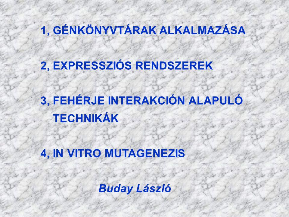 1, GÉNKÖNYVTÁRAK ALKALMAZÁSA 2, EXPRESSZIÓS RENDSZEREK 3, FEHÉRJE INTERAKCIÓN ALAPULÓ TECHNIKÁK 4, IN VITRO MUTAGENEZIS Buday László