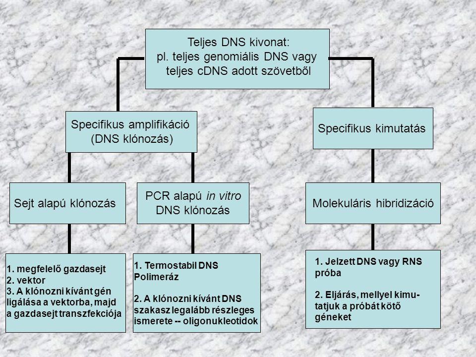 Teljes DNS kivonat: pl. teljes genomiális DNS vagy teljes cDNS adott szövetből Specifikus amplifikáció (DNS klónozás) Specifikus kimutatás PCR alapú i