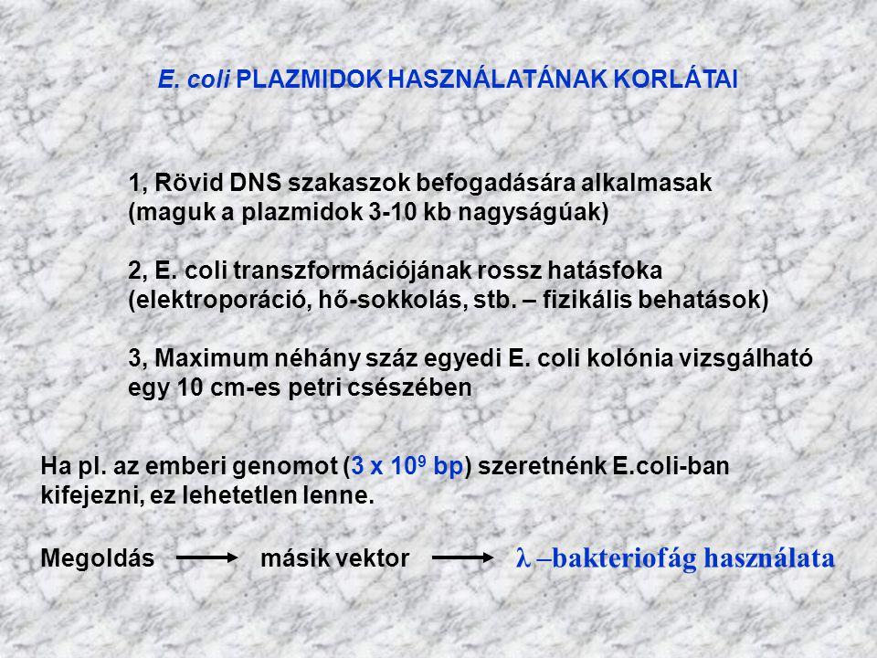 E. coli PLAZMIDOK HASZNÁLATÁNAK KORLÁTAI 1, Rövid DNS szakaszok befogadására alkalmasak (maguk a plazmidok 3-10 kb nagyságúak) 2, E. coli transzformác