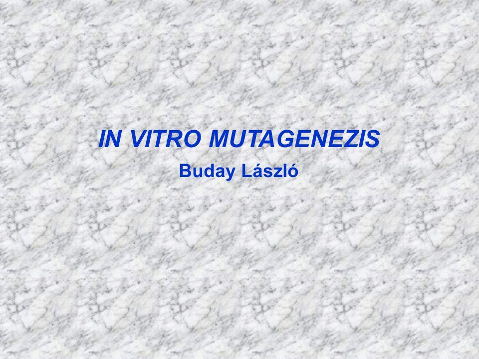 AZ IN VITRO MUTAGENEZIS LEHETSÉGES FORMÁI A, regulátor régiók mutagenezise B, kódoló szekvenciák mutagenezise 1, deléciók 2, inzerciók 3, szubsztitúciók 4, pont mutációk 5, hely specifikus mutációk (v.