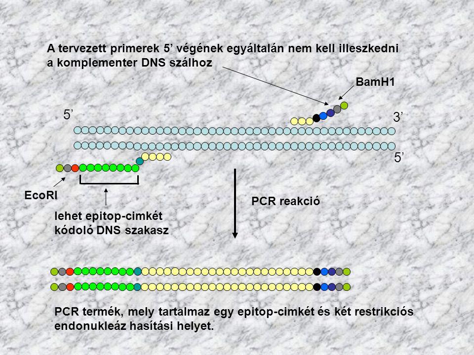 5' 3' 5' A tervezett primerek 5' végének egyáltalán nem kell illeszkedni a komplementer DNS szálhoz lehet epitop-cimkét kódoló DNS szakasz EcoRI BamH1