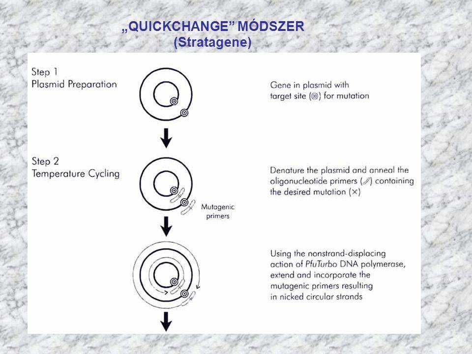 """""""QUICKCHANGE"""" MÓDSZER (Stratagene)"""