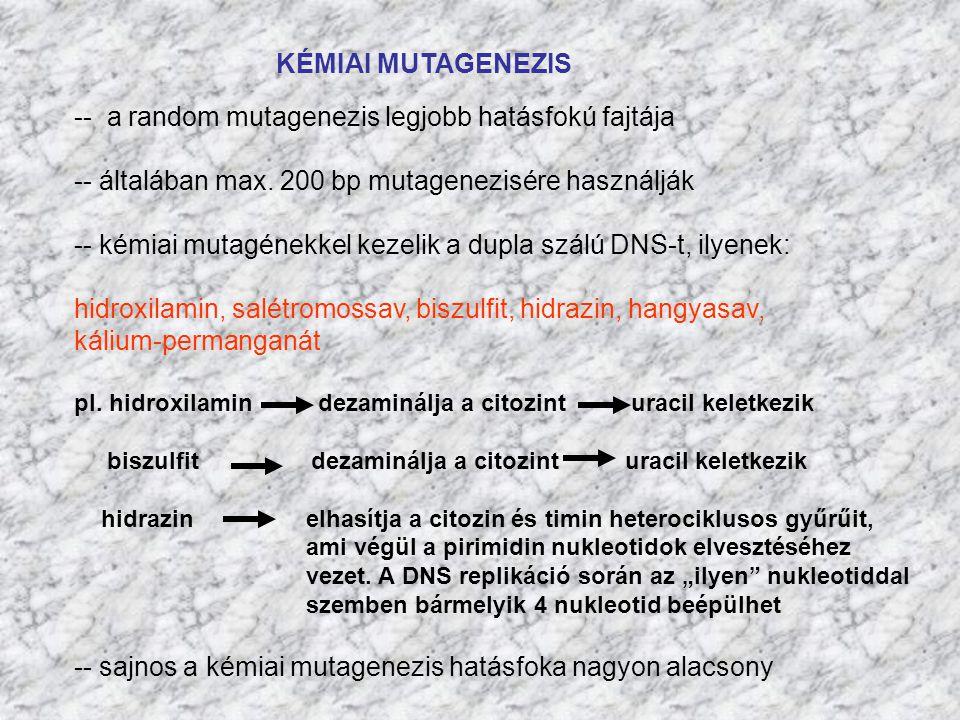 KÉMIAI MUTAGENEZIS -- a random mutagenezis legjobb hatásfokú fajtája -- általában max. 200 bp mutagenezisére használják -- kémiai mutagénekkel kezelik