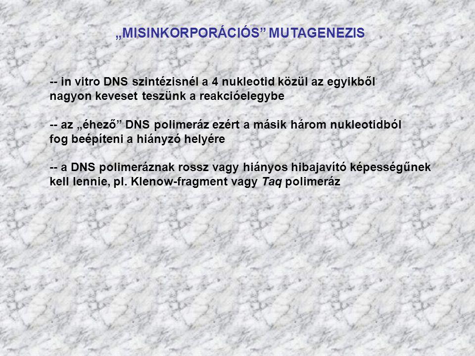 """""""MISINKORPORÁCIÓS"""" MUTAGENEZIS -- in vitro DNS szintézisnél a 4 nukleotid közül az egyikből nagyon keveset teszünk a reakcióelegybe -- az """"éhező"""" DNS"""