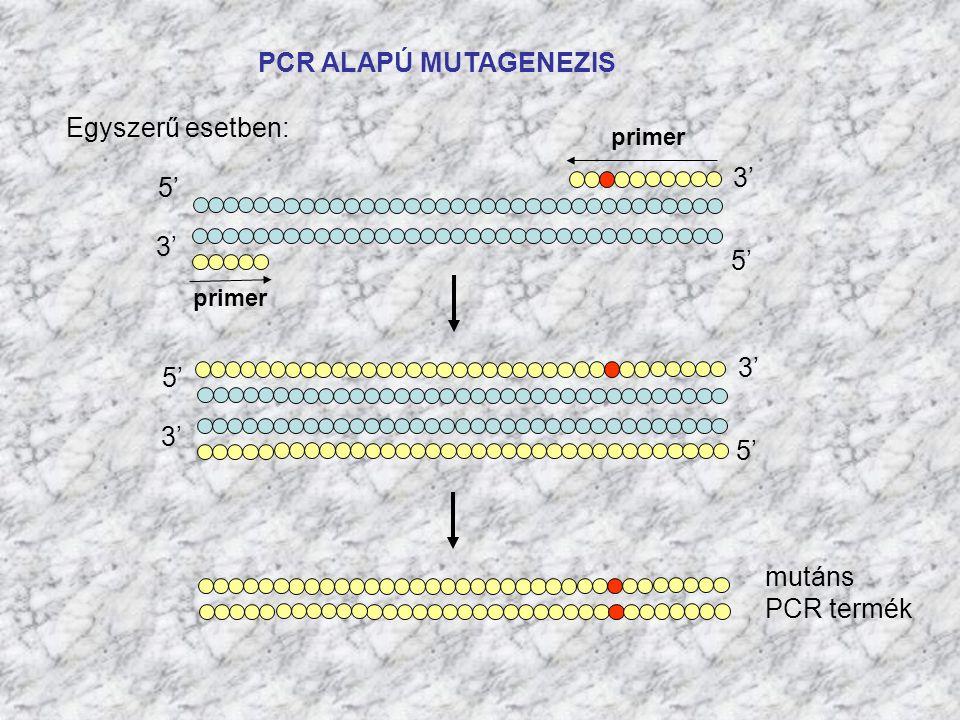 PCR ALAPÚ MUTAGENEZIS Egyszerű esetben: 5' 3' 5' 3' 5' mutáns PCR termék primer