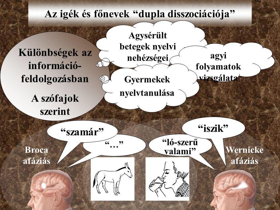 Az igék és főnevek dupla disszociációja Különbségek az információ- feldolgozásban A szófajok szerint Agysérült betegek nyelvi nehézségei agyi folyamatok vizsgálata Gyermekek nyelvtanulása … ló-szerű valami iszik szamár Broca afáziás Wernicke afáziás