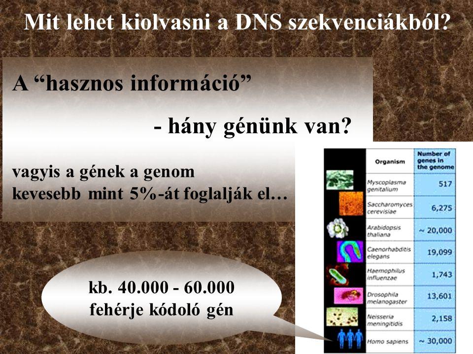 A hasznos információ - hány génünk van.
