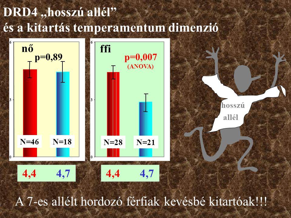 4,4 4,7 0 3 6 ffi N=28 p=0,007 (ANOVA) N=21 0 3 6 nő p=0,89 N=46N=18 hosszú allél A 7-es allélt hordozó férfiak kevésbé kitartóak!!.