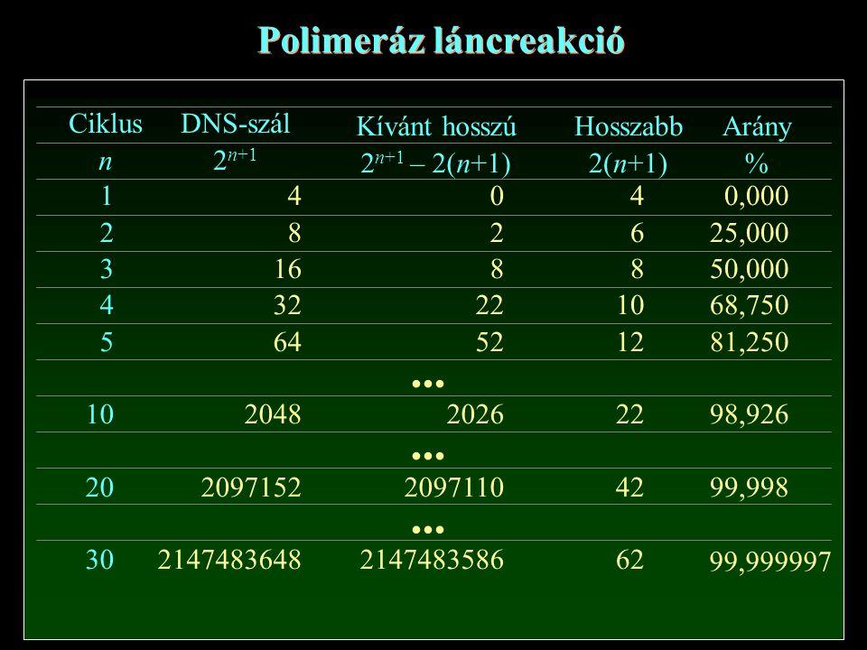 Ciklus n 1 2 3 4 5 10 20 30 DNS-szál 2 n+1 4 8 16 32 64 2048 2097152 2147483648... Kívánt hosszú 2 n+1 – 2(n+1) Hosszabb 2(n+1) Arány % 0 2 8 22 52 20