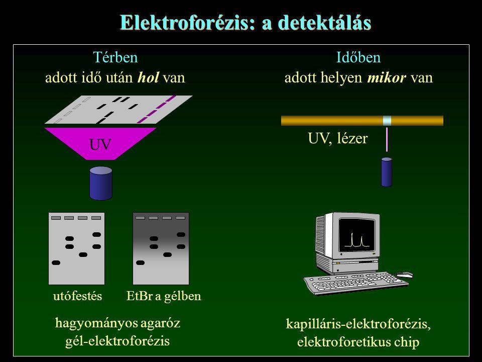 Elektroforézis: a detektálás Térben adott idő után hol van hagyományos agaróz gél-elektroforézis Időben adott helyen mikor van kapilláris-elektroforézis, elektroforetikus chip UV utófestésEtBr a gélben UV, lézer