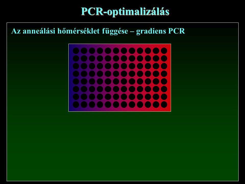 PCR-optimalizálás Az anneálási hőmérséklet függése – gradiens PCR
