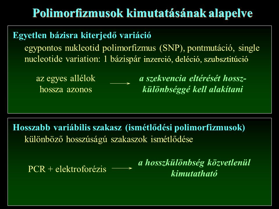 Egyetlen bázisra kiterjedő variáció Hosszabb variábilis szakasz (ismétlődési polimorfizmusok) egypontos nukleotid polimorfizmus (SNP), pontmutáció, single nucleotide variation: 1 bázispár inzerció, deléció, szubsztitúció különböző hosszúságú szakaszok ismétlődése Polimorfizmusok kimutatásának alapelve PCR + elektroforézis a hosszkülönbség közvetlenül kimutatható az egyes allélok hossza azonos a szekvencia eltérését hossz- különbséggé kell alakítani