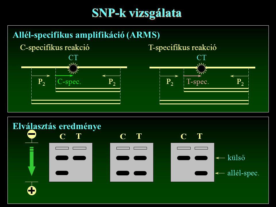 SNP-k vizsgálata Allél-specifikus amplifikáció (ARMS) C-spec.P2P2 CT P2P2 T-spec.P2P2 CT P2P2 C-specifikus reakcióT-specifikus reakció Elválasztás eredménye C T C T C T külső allél-spec.