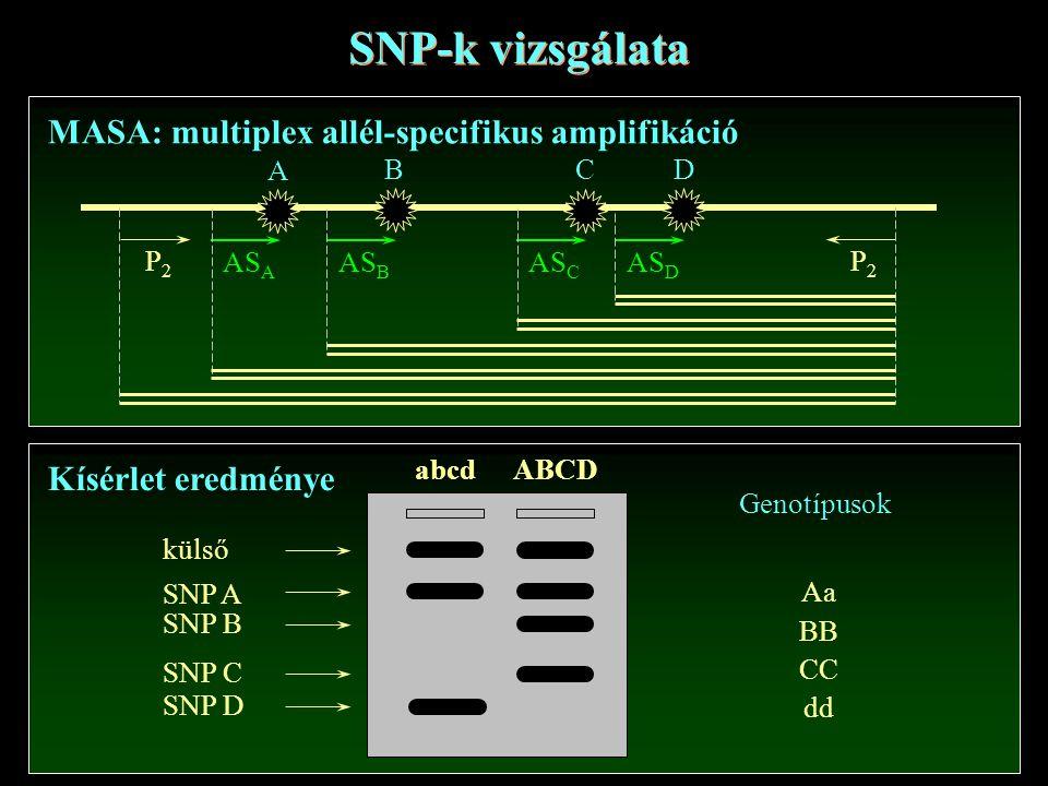 SNP-k vizsgálata MASA: multiplex allél-specifikus amplifikáció AS A P2P2 A P2P2 B C D AS B AS C AS D Kísérlet eredménye abcd ABCD külső SNP A SNP B SN