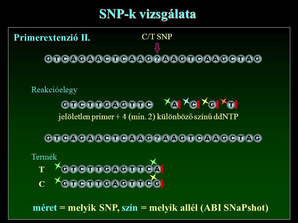 SNP-k vizsgálata Primerextenzió II. GTCAGAACTCAAG?AAGTCAAGCTAG C/T SNP jelöletlen primer + 4 (min. 2) különböző színű ddNTP Reakcióelegy GTCTTGAACG T