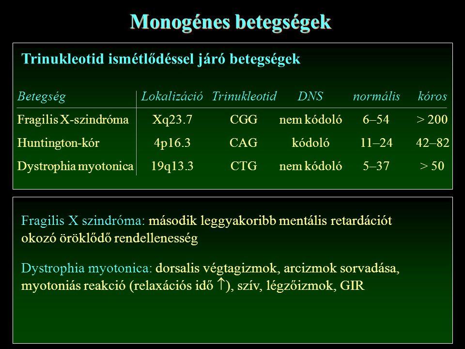 Monogénes betegségek Trinukleotid ismétlődéssel járó betegségek Betegség Fragilis X-szindróma Huntington-kór Dystrophia myotonica Lokalizáció Xq23.7 4p16.3 19q13.3 Trinukleotid CGG CAG CTG normális 6–54 11–24 5–37 kóros > 200 42–82 > 50 DNS nem kódoló kódoló nem kódoló Fragilis X szindróma: második leggyakoribb mentális retardációt okozó öröklődő rendellenesség Dystrophia myotonica: dorsalis végtagizmok, arcizmok sorvadása, myotoniás reakció (relaxációs idő  ), szív, légzőizmok, GIR