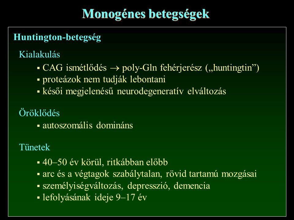 """Monogénes betegségek Huntington-betegség  CAG ismétlődés  poly-Gln fehérjerész (""""huntingtin )  proteázok nem tudják lebontani  késői megjelenésű neurodegeneratív elváltozás  autoszomális domináns Kialakulás  40–50 év körül, ritkábban előbb  arc és a végtagok szabálytalan, rövid tartamú mozgásai  személyiségváltozás, depresszió, demencia  lefolyásának ideje 9–17 év Tünetek Öröklődés"""