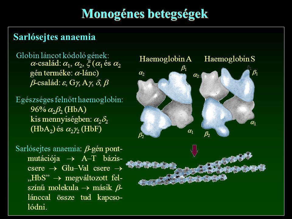 """Monogénes betegségek Sarlósejtes anaemia 22 11 Haemoglobin A 11 22 11 22 11 22 Haemoglobin S Globin láncot kódoló gének:  -család:  1,  2,  1 és  2 gén terméke:  -lánc   -család: , G , A , ,  Egészséges felnőtt haemoglobin: 96%  2  2 (HbA) kis mennyiségben:  2  2 (HbA 2 ) és  2  2 (HbF) Sarlósejtes anaemia:  -gén pont- mutációja  A–T bázis- csere  Glu–Val csere  """"HbS  megváltozott fel- színű molekula  másik  - lánccal össze tud kapcso- lódni."""