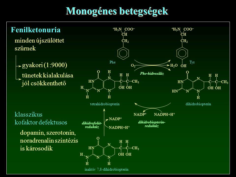 Fenilketonuria Monogénes betegségek minden újszülöttet szűrnek gyakori (1:9000) tünetek kialakulása jól csökkenthető klasszikus kofaktor defektusos dopamin, szerotonin, noradrenalin szintézis is károsodik
