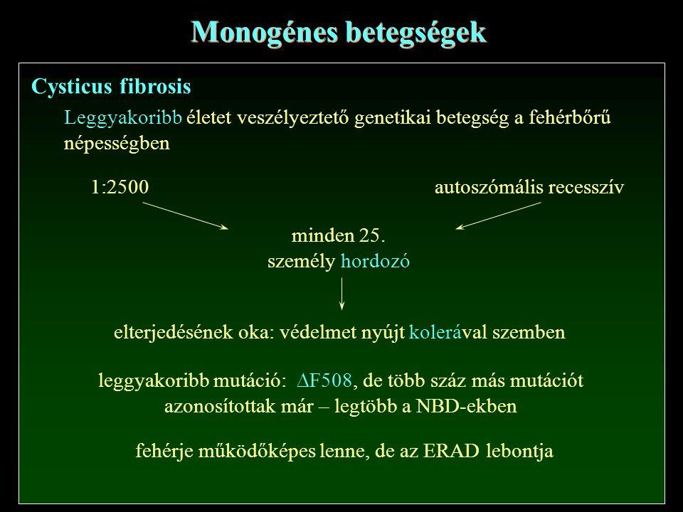 Cysticus fibrosis Monogénes betegségek Leggyakoribb életet veszélyeztető genetikai betegség a fehérbőrű népességben 1:2500autoszómális recesszív minde