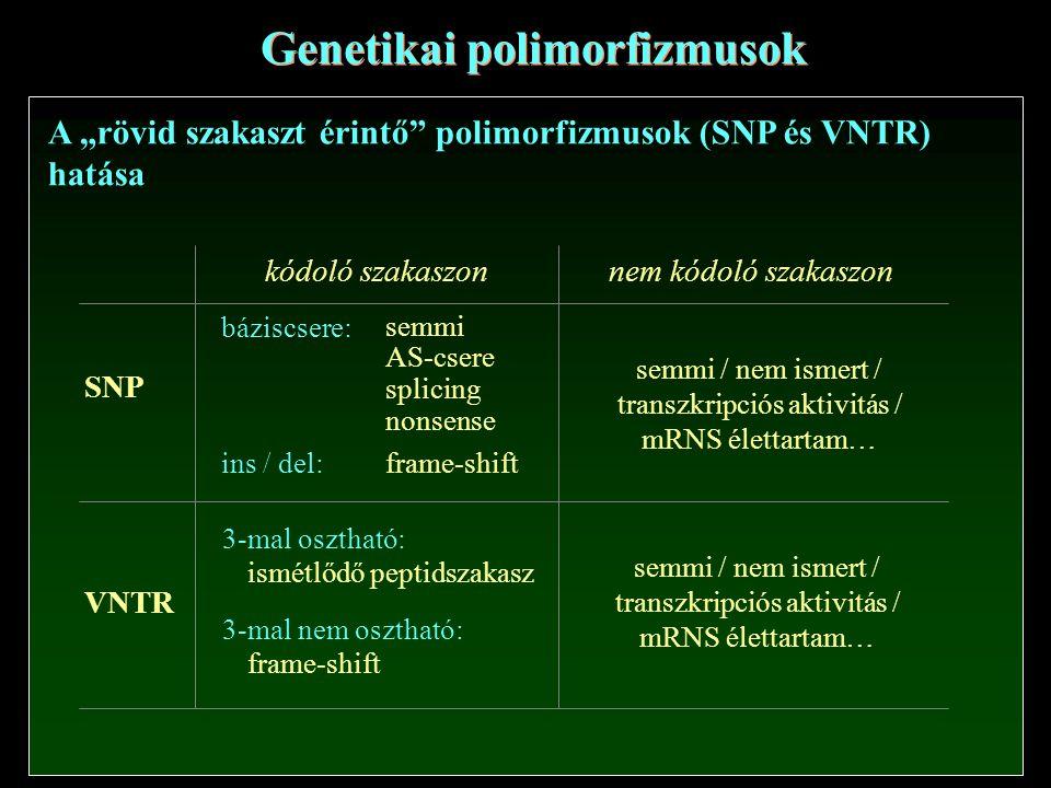 """Genetikai polimorfizmusok A """"rövid szakaszt érintő polimorfizmusok (SNP és VNTR) hatása SNP VNTR kódoló szakaszonnem kódoló szakaszon báziscsere: semmi AS-csere splicing nonsense ins / del: frame-shift 3-mal osztható: ismétlődő peptidszakasz 3-mal nem osztható: frame-shift semmi / nem ismert / transzkripciós aktivitás / mRNS élettartam… semmi / nem ismert / transzkripciós aktivitás / mRNS élettartam…"""