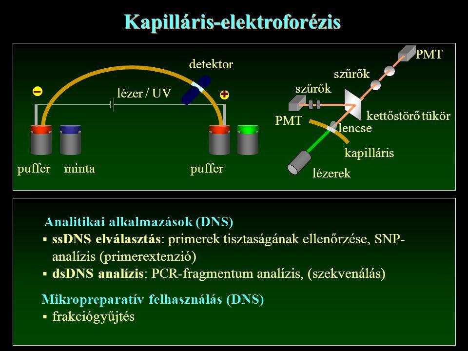 Kapilláris-elektroforézis + – mintapuffer detektor lézer / UV lézerek kapilláris kettőstörő tükör szűrők PMT lencse szűrők Analitikai alkalmazások (DN