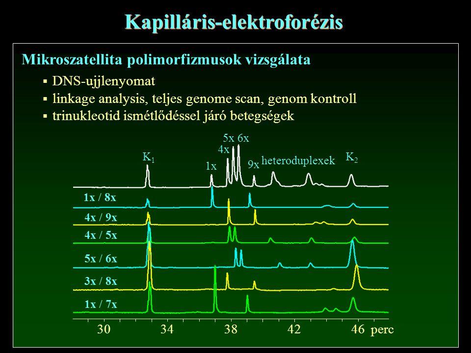 K1K1 K2K2 1x 4x 5x6x 9x heteroduplexek 1x / 8x 4x / 9x 4x / 5x 5x / 6x 3x / 8x 1x / 7x 30384642perc 34 Mikroszatellita polimorfizmusok vizsgálata Kapilláris-elektroforézis  DNS-ujjlenyomat  linkage analysis, teljes genome scan, genom kontroll  trinukleotid ismétlődéssel járó betegségek