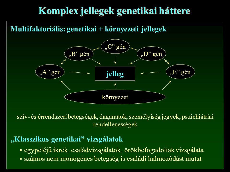"""Komplex jellegek genetikai háttere Multifaktoriális: genetikai + környezeti jellegek """"A gén """"B gén """"C gén """"D gén """"E gén környezet jelleg """"Klasszikus genetikai vizsgálatok  egypetéjű ikrek, családvizsgálatok, örökbefogadottak vizsgálata  számos nem monogénes betegség is családi halmozódást mutat szív- és érrendszeri betegségek, daganatok, személyiség jegyek, pszichiátriai rendellenességek"""