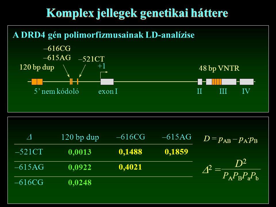  –521CT –615AG –616CG 120 bp dup 0,0013 0,0922 0,0248 –616CG 0,1488 0,4021 –615AG 0,1859 D = p AB – p A ·p B Komplex jellegek genetikai háttere A DRD4 gén polimorfizmusainak LD-analízise 120 bp dup –616CG –615AG –521CT exon IIIIIIIV 48 bp VNTR +1 5' nem kódoló  2 = D2PAPBPaPbD2PAPBPaPb