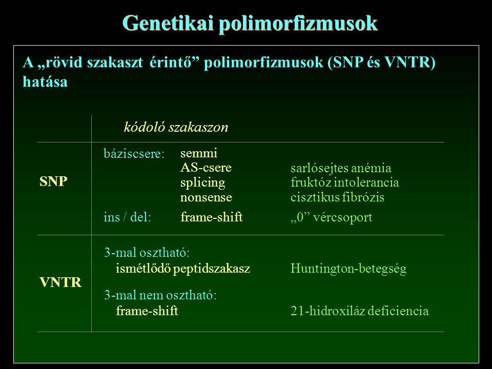 """Genetikai polimorfizmusok A """"rövid szakaszt érintő polimorfizmusok (SNP és VNTR) hatása SNP VNTR kódoló szakaszon báziscsere: semmi AS-csere splicing nonsense ins / del: frame-shift 3-mal osztható: ismétlődő peptidszakasz 3-mal nem osztható: frame-shift sarlósejtes anémia fruktóz intolerancia cisztikus fibrózis """"0 vércsoport Huntington-betegség 21-hidroxiláz deficiencia"""