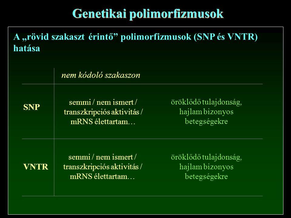 """Genetikai polimorfizmusok A """"rövid szakaszt érintő polimorfizmusok (SNP és VNTR) hatása SNP VNTR nem kódoló szakaszon semmi / nem ismert / transzkripciós aktivitás / mRNS élettartam… semmi / nem ismert / transzkripciós aktivitás / mRNS élettartam… öröklődő tulajdonság, hajlam bizonyos betegségekre öröklődő tulajdonság, hajlam bizonyos betegségekre"""
