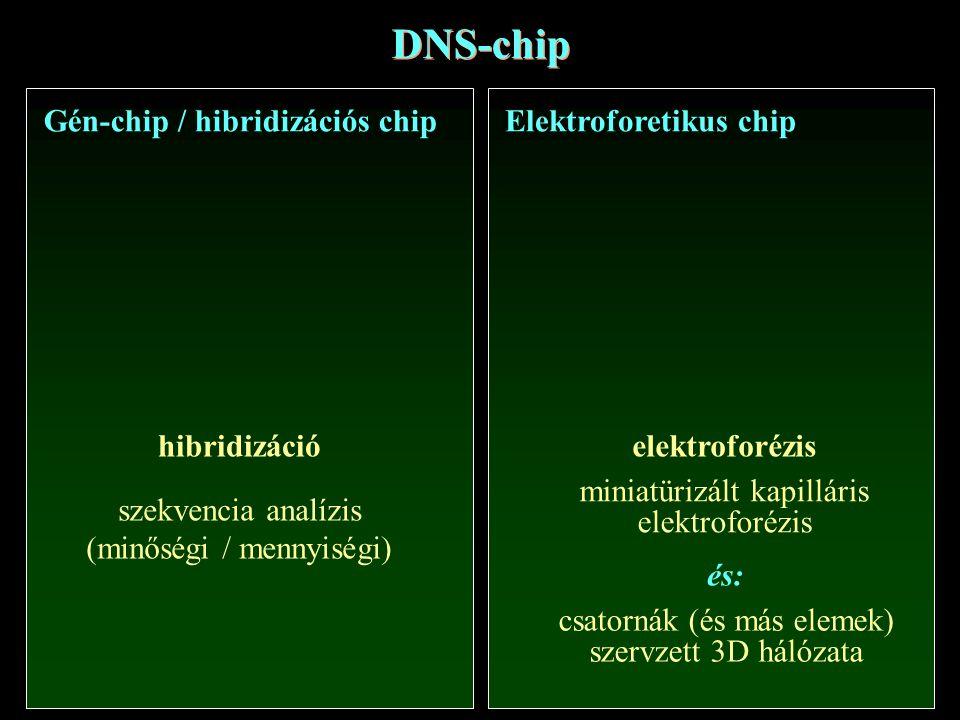 DNS-chip Gén-chip / hibridizációs chipElektroforetikus chip hibridizáció szekvencia analízis (minőségi / mennyiségi) elektroforézis miniatürizált kapi