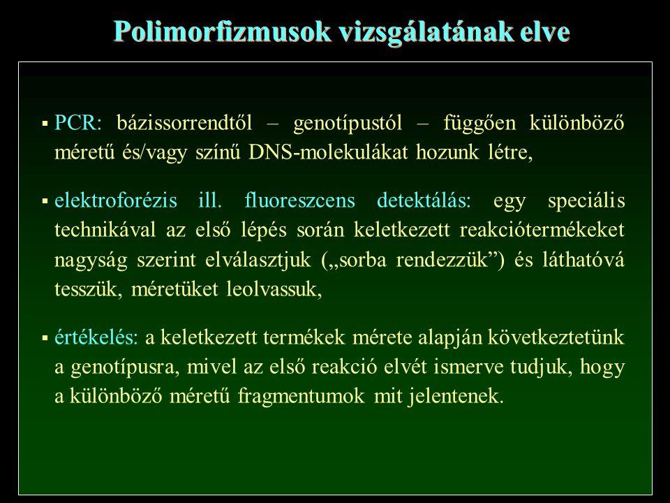 Polimorfizmusok vizsgálatának elve  PCR: bázissorrendtől – genotípustól – függően különböző méretű és/vagy színű DNS-molekulákat hozunk létre,  elektroforézis ill.
