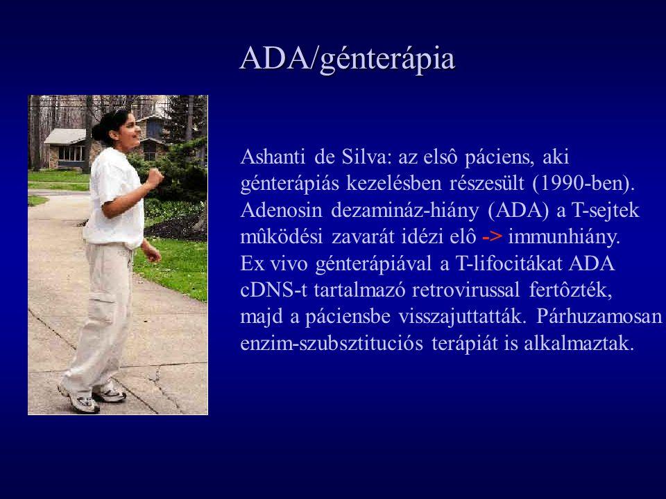 ADA/génterápia Ashanti de Silva: az elsô páciens, aki génterápiás kezelésben részesült (1990-ben). Adenosin dezamináz-hiány (ADA) a T-sejtek mûködési