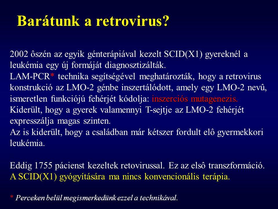 Barátunk a retrovirus? 2002 ôszén az egyik génterápiával kezelt SCID(X1) gyereknél a leukémia egy új formáját diagnosztizálták. LAM-PCR* technika segí