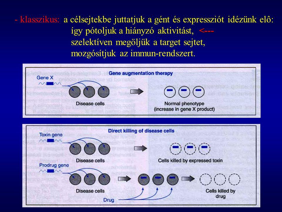 - klasszikus: a célsejtekbe juttatjuk a gént és expressziót idézünk elô: <--- így pótoljuk a hiányzó aktivitást, <--- szelektíven megöljük a target sejtet, mozgósítjuk az immun-rendszert.