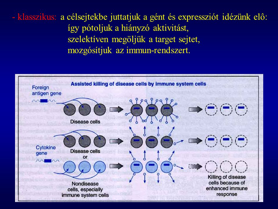 - klasszikus: a célsejtekbe juttatjuk a gént és expressziót idézünk elô: így pótoljuk a hiányzó aktivitást, szelektíven megöljük a target sejtet, mozg