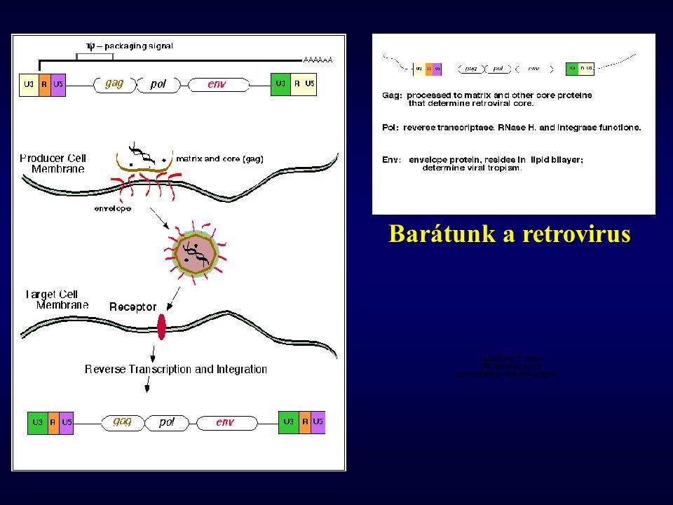 Barátunk a retrovirus