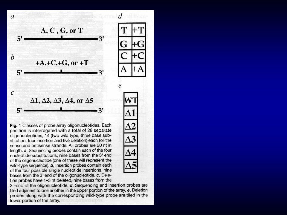 Átfedô, rövid (25 nt) hibridizációs próbák (egy bázis eltolással )