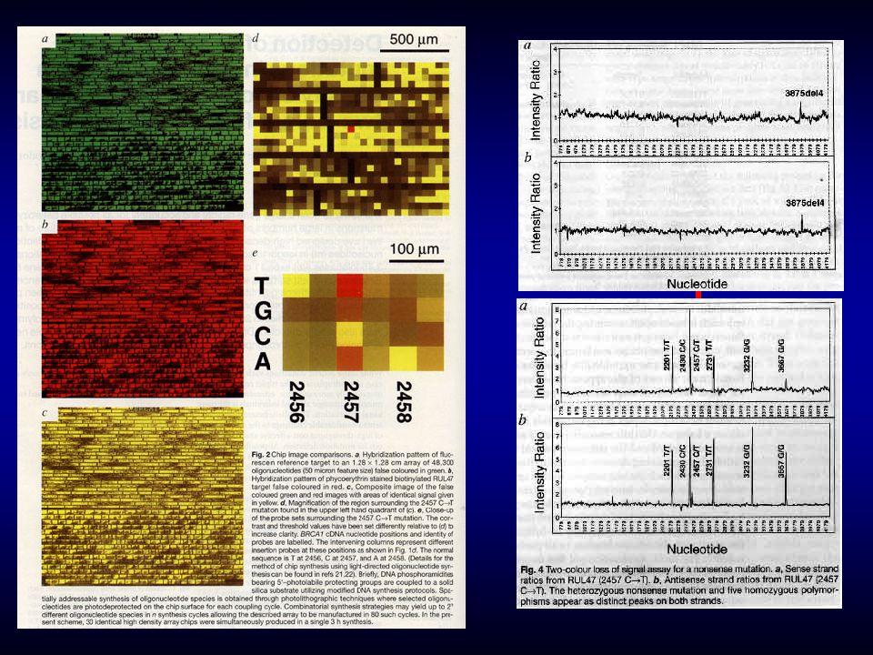 1161 gén, 60 tumor-eredetû sejtvonal Expressziós mintázat