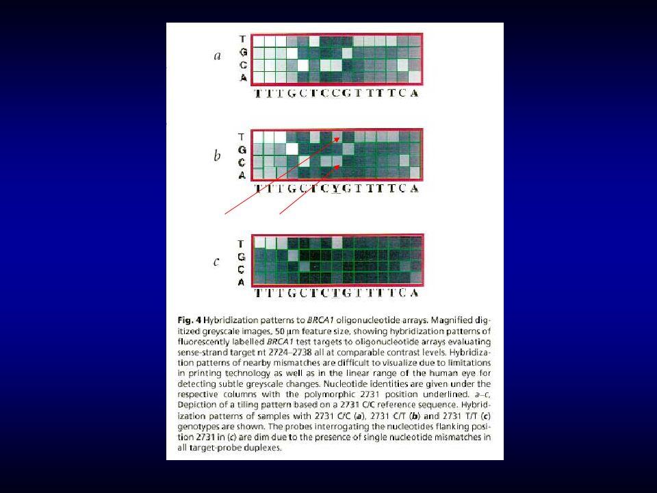 1161 gén, 60 tumor-eredetû sejtvonal expressziós pattern NAGYÍTÁS