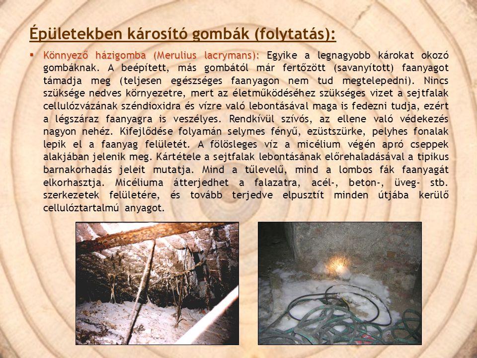 Épületekben károsító gombák (folytatás):  Könnyező házigomba (Merulius lacrymans):  Könnyező házigomba (Merulius lacrymans): Egyike a legnagyobb kár