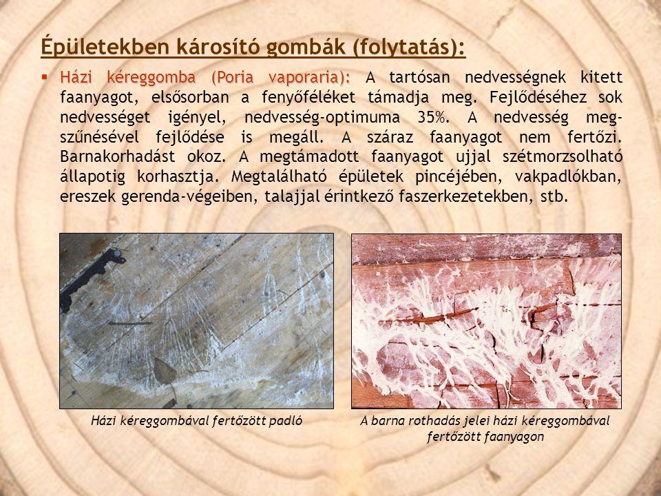 Épületekben károsító gombák (folytatás):  Házi kéreggomba (Poria vaporaria):  Házi kéreggomba (Poria vaporaria): A tartósan nedvességnek kitett faan