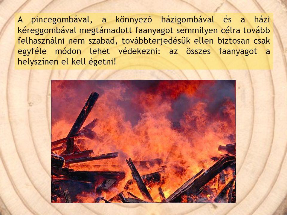 A pincegombával, a könnyező házigombával és a házi kéreggombával megtámadott faanyagot semmilyen célra tovább felhasználni nem szabad, továbbterjedésü