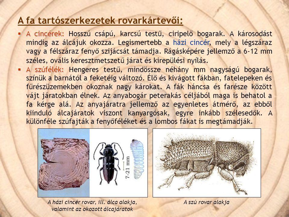 A fa tartószerkezetek rovarkártevői:  A cincérek:  A cincérek: Hosszú csápú, karcsú testű, ciripelő bogarak. A károsodást mindig az álcájuk okozza.